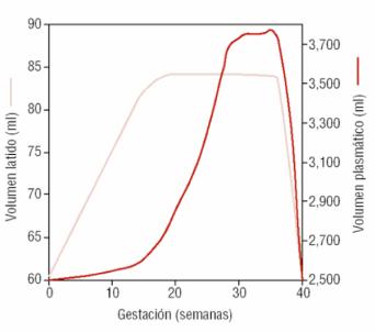 gestacion-volumen-latido